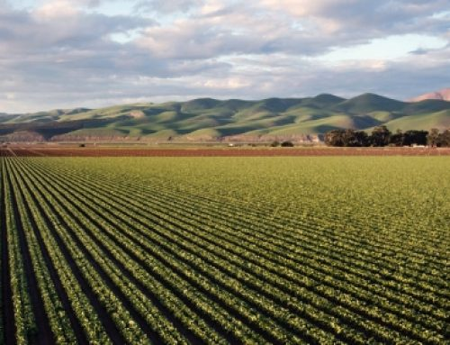 El papel del agricultor, un actor clave en la transición de su territorio