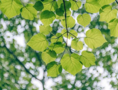 ¿Por qué el 2020 será un año clave para la naturaleza y el sector privado?