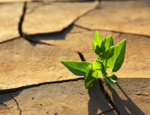 ¿Preparados para la década de la resiliencia?