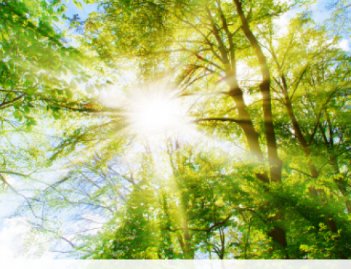 "Forética en la 'European Green Week': ""Es el momento de la naturaleza"""