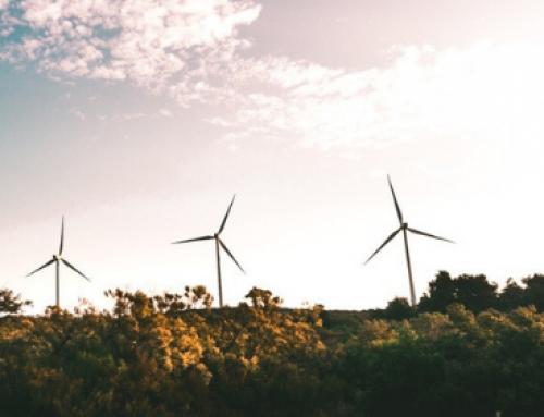 El futuro de los mercados voluntarios de carbono